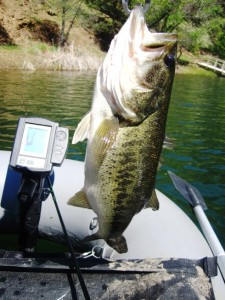 4 lb Largemouth Bass